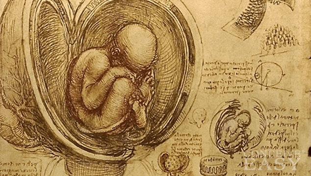 How Does Nutrition Get from the Placenta to the Fetus?