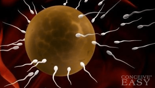 Increase Sperm Mobility