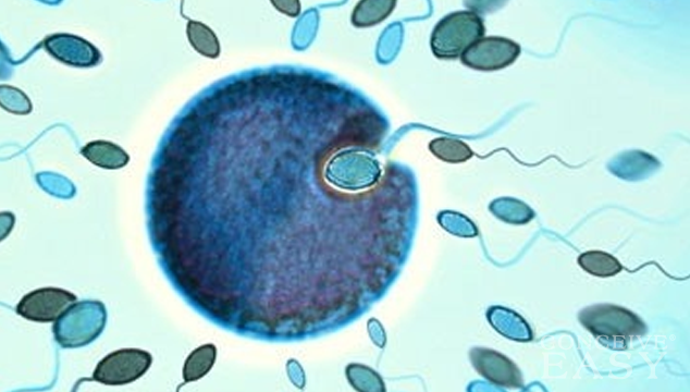 New Method of Fertilization could improve IVF Success Rates