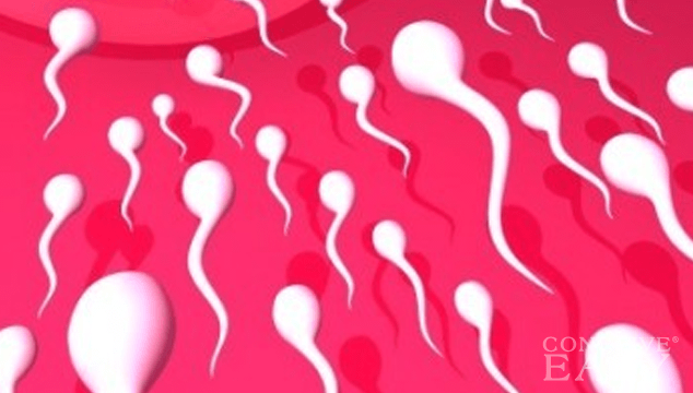 Semen Allergy: Cause of Infertility