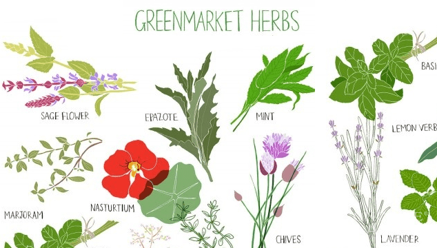 herb list for increase sperm
