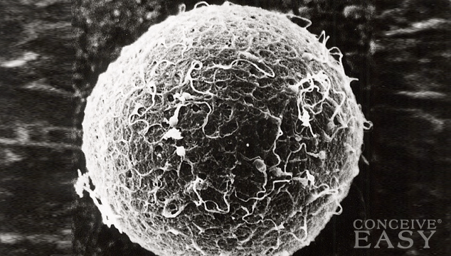 What Is A Blighted Ovum?