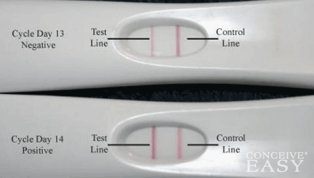 OPK as HPT Can I Use an Ovulation Prediction Kit as a