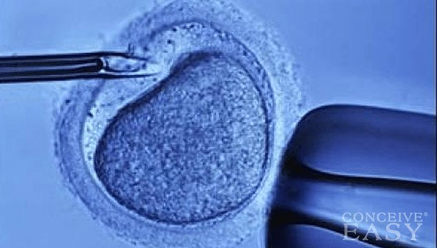 In Vitro Fertilization (IVF): How You Can Prepare Using These 3 Tips