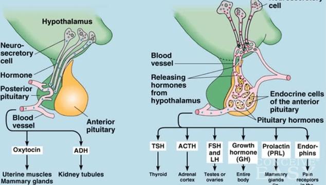 High FSH levels and Fertility Treatment