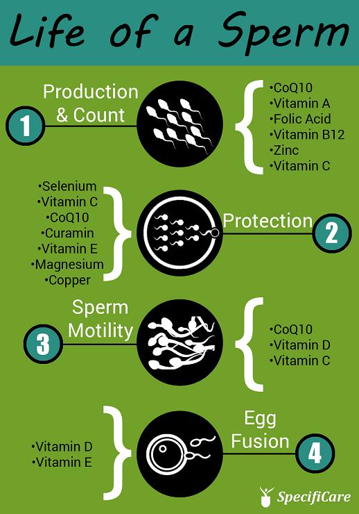 Folic acid and sperm count