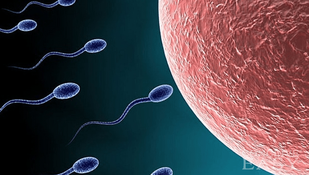 Low Sperm Count on the Rise