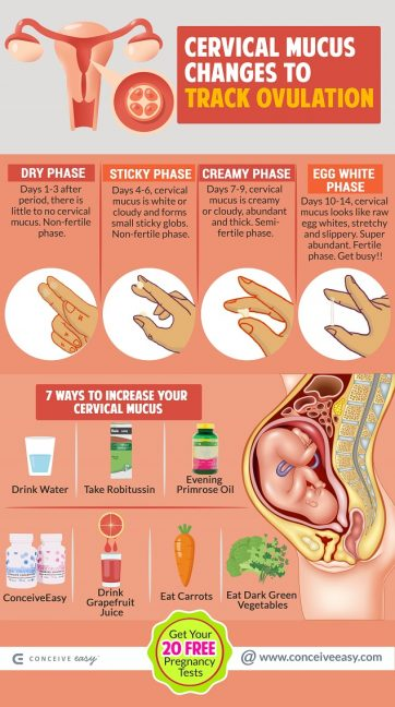 Cervical Mucus Changes - mid-cycle spotting