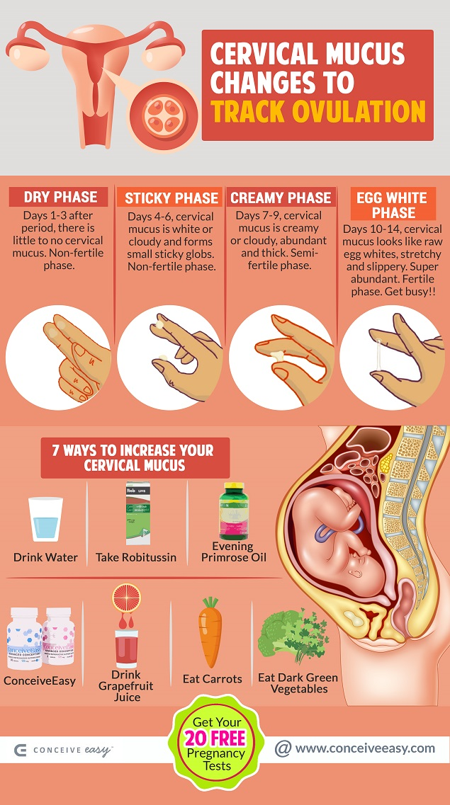 Cervical Mucus Changes to Track Ovulation Infographic