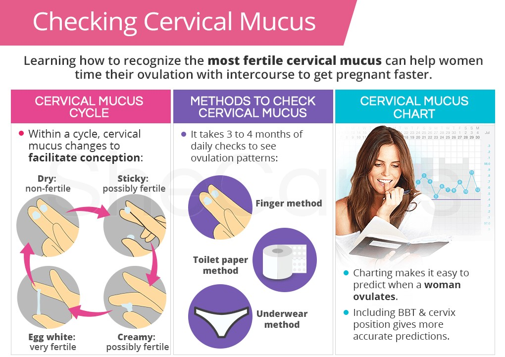 checking-cervical-mucus