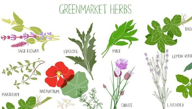 What Herbs Help Increase Fertility in Men?