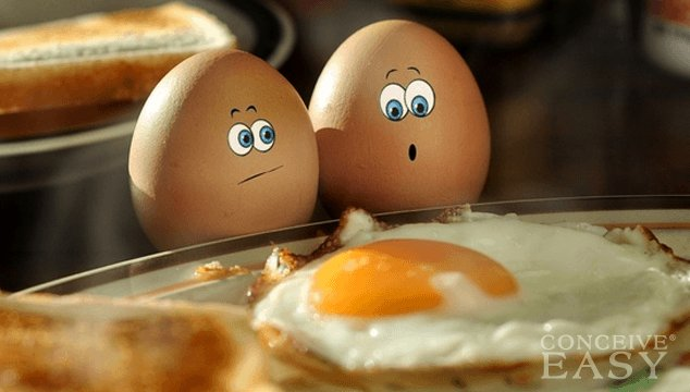 How Many Eggs do you need for IVF?