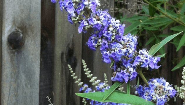 Vitex for Fertility - What You Need to Know Before Using It