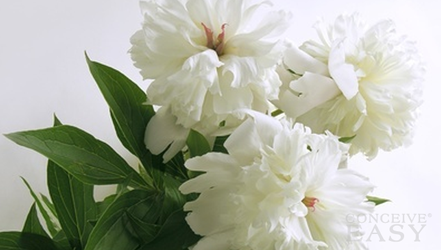 White Peony Herb to Promote Fertility