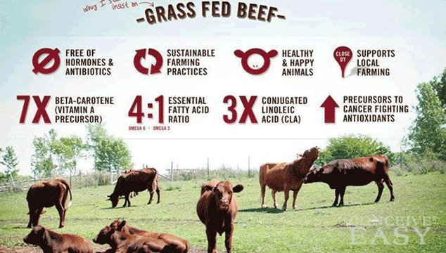 Is Grass-Fed Beef Better for Fertility?