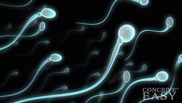 What are the Steps if I am Ready to Use Donor Sperm?