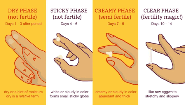 Different types of cervical mucus