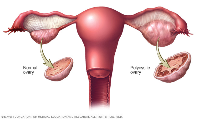 Can Cervical Mucus Detect Early Pregnancy? | ConceiveEasy com