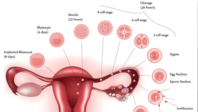 spotting between period what s the difference between implantation bleeding and 30196