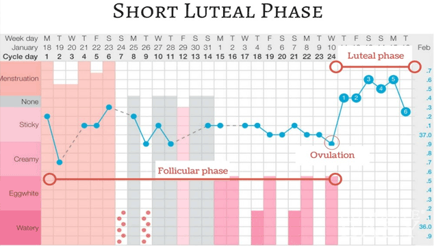 How to Get Pregnant with Short Luteal Phase