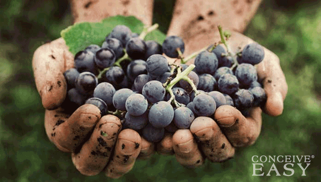 Do Grapes Increase Fertility?