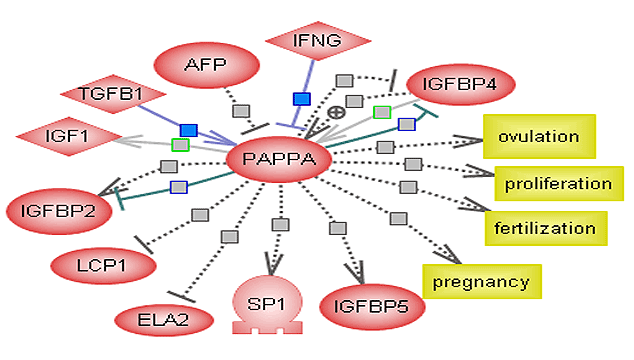 human-chorionic-gonadotropin-hcg-and-pregnancy-associated-plasma-protein-papp-a
