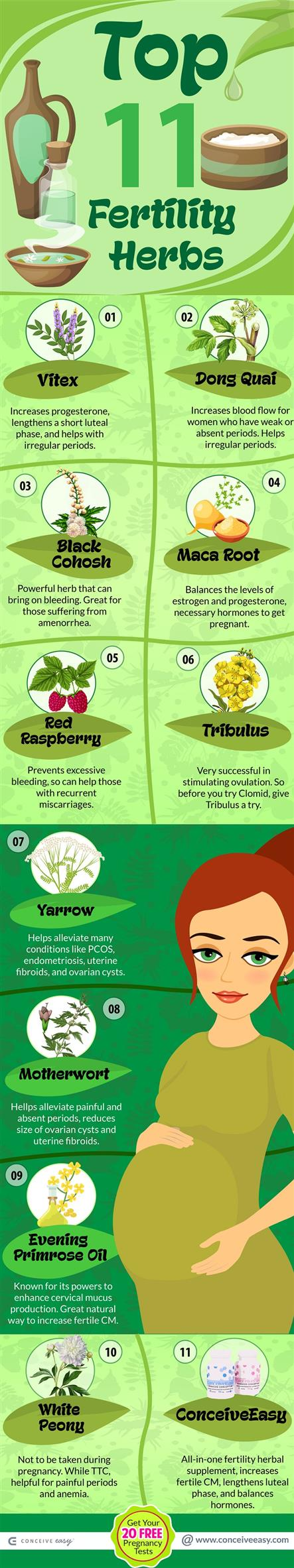 Top 11 Fertility Herbs Infographic