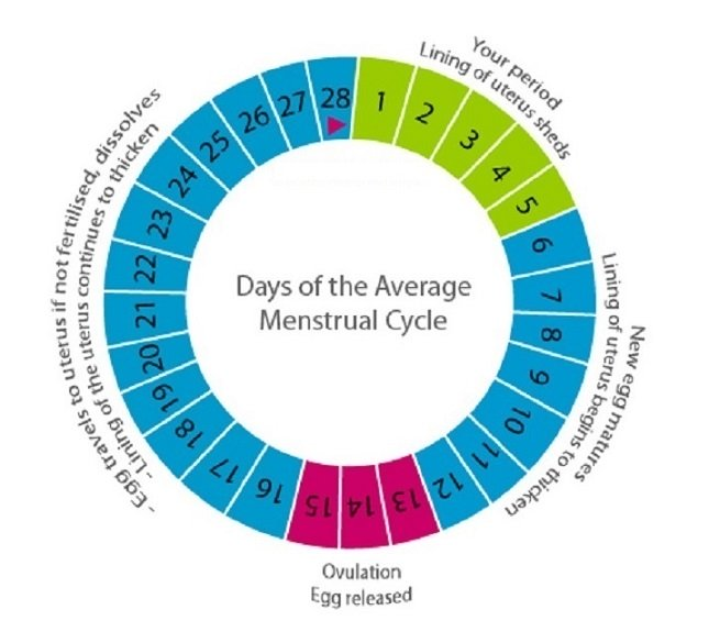 how to track ovulation to boost pregnancy chances