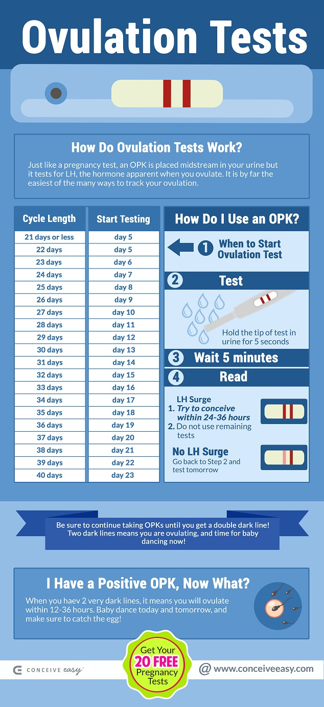 When do I Take an Ovulation Test Infographic