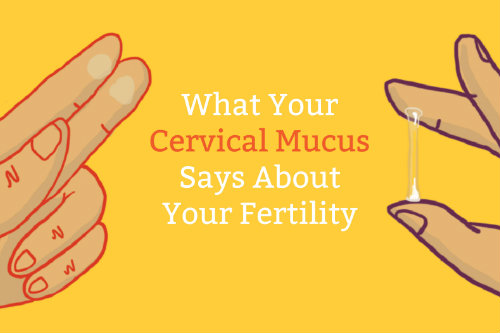 Cervical mucus and ovulation