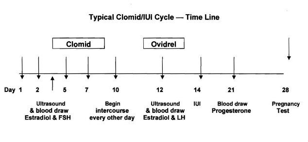 Clomid Cycle