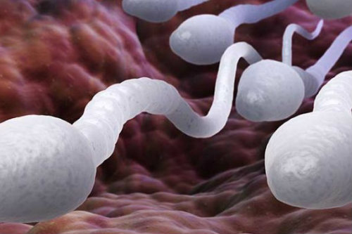 man's sperm count will deplete quickly if sex happens