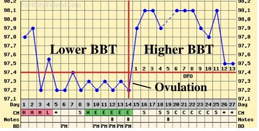 lower body basal temperatures
