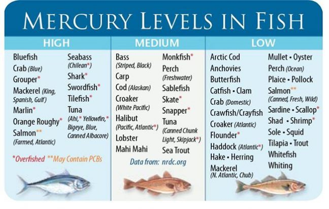 Fish that Have High Levels Of Mercury - Foods to Avoid during Pregnancy