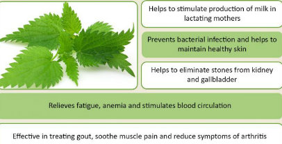Stinging Nettle  - Chinese Herbs for Fertility