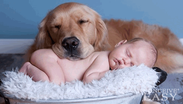 7-Ways-To-Prepare-Dog-for-New-Baby