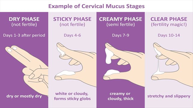 Top-7-Signs-That-You-Are-Not-Ovulating